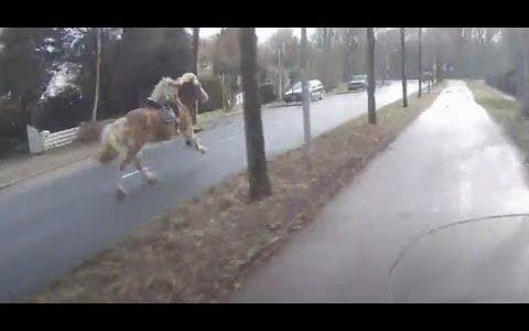 Un hombre montado en una scooter ayuda a rescatar a un caballo desbocado