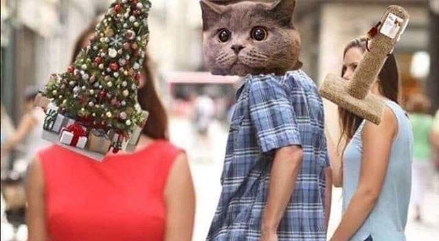 Gatos, los depredadores naturales de los árboles de Navidad
