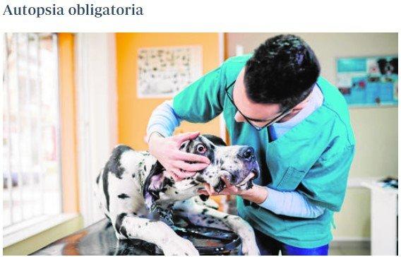 La nueva (y polémica) ley de mascotas de la Rioja tiene varios puntos que se podrían haber aplicado antes a personas mayores