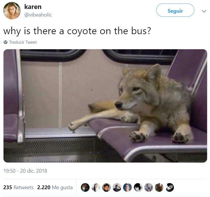 ¿Qué hace ese coyote en un autobús?