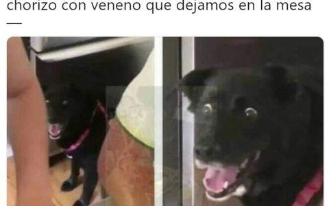 """""""Las ratas"""""""