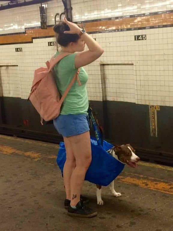 """""""Prohibido llevar perros en el metro salvo que vayan en una bolsa"""""""