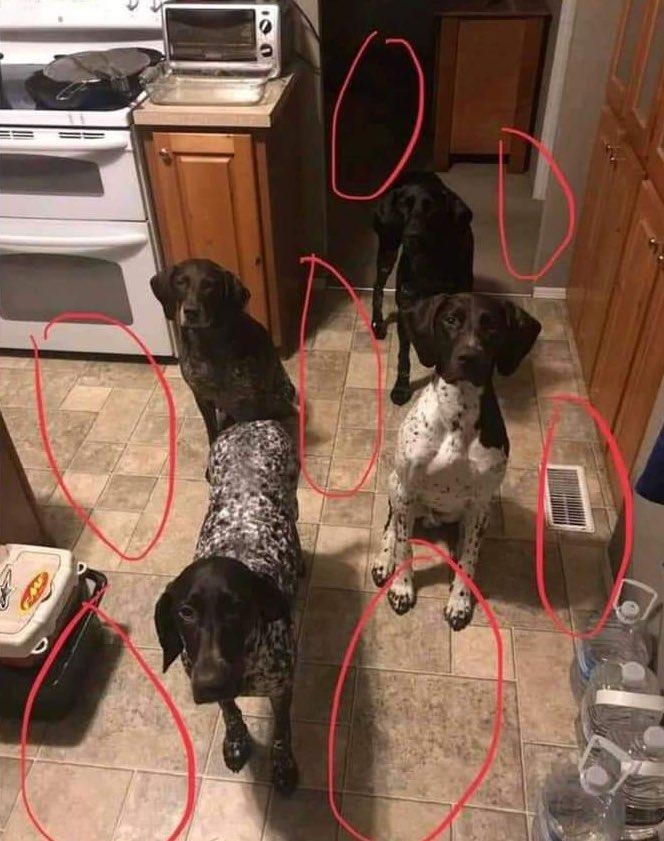 Dice mi mujer que no hay espacio para más perros...