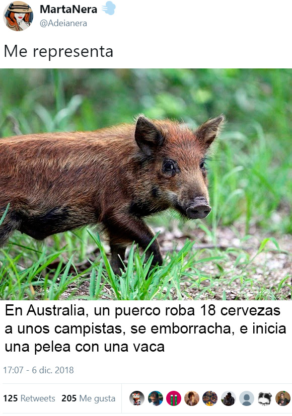 En Australia el animal que no te mata, te roba