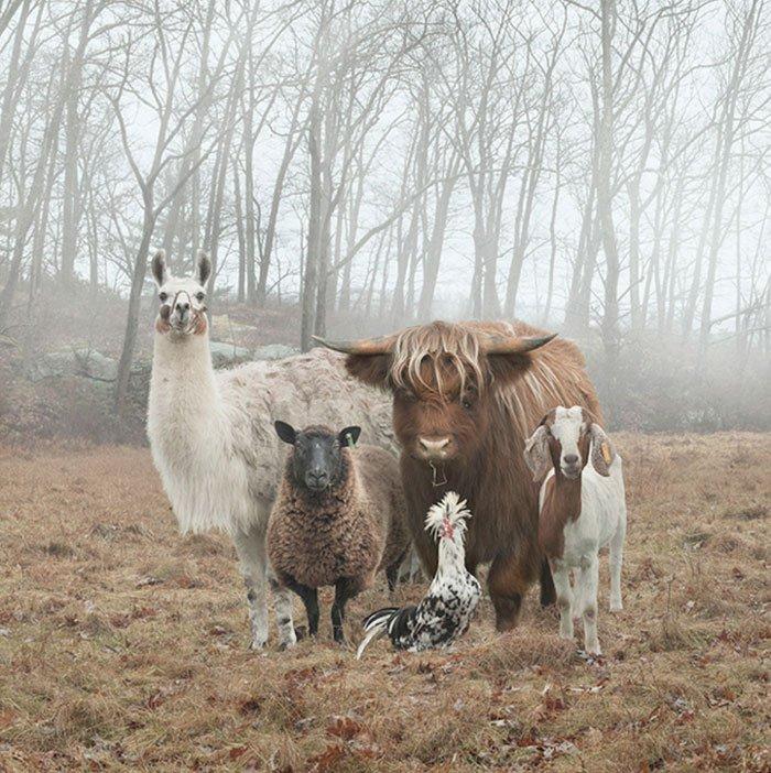Fotos de animales que parecen portadas de discos
