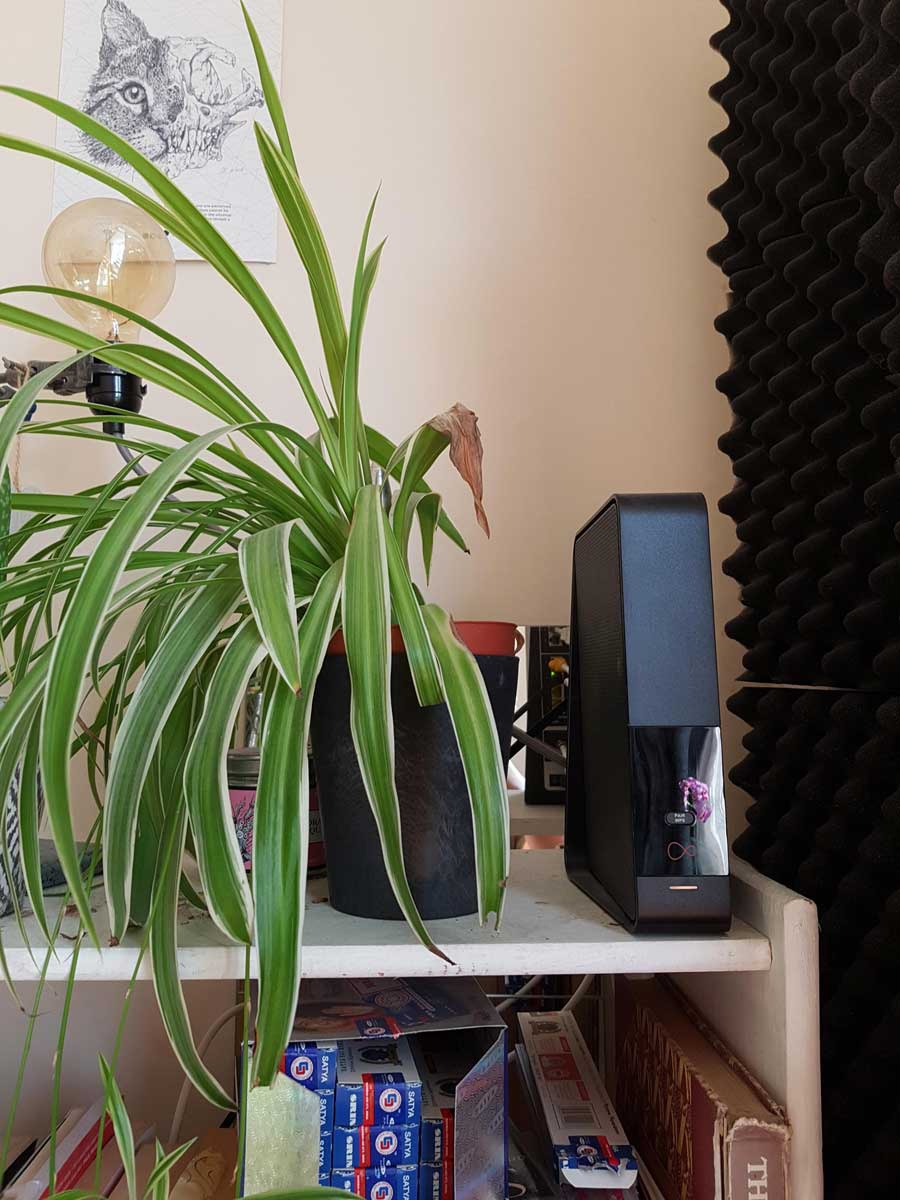 Cuando tu planta es alérgica al wifi