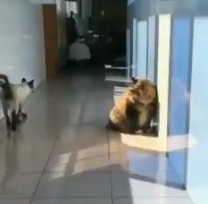 Hay gatos que solo quieren ver arder el mundo