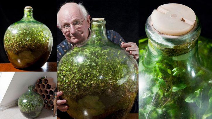 Un mundo en una botella