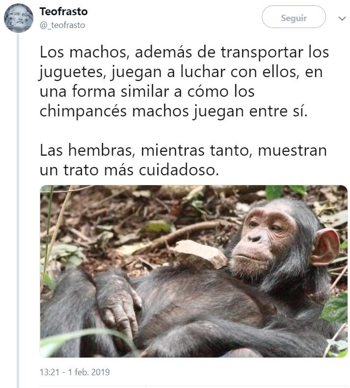 Hilo sobre constructo social: ¿Por qué las chimpancés hembra juegan con rocas simulando que cuidan a un bebé?