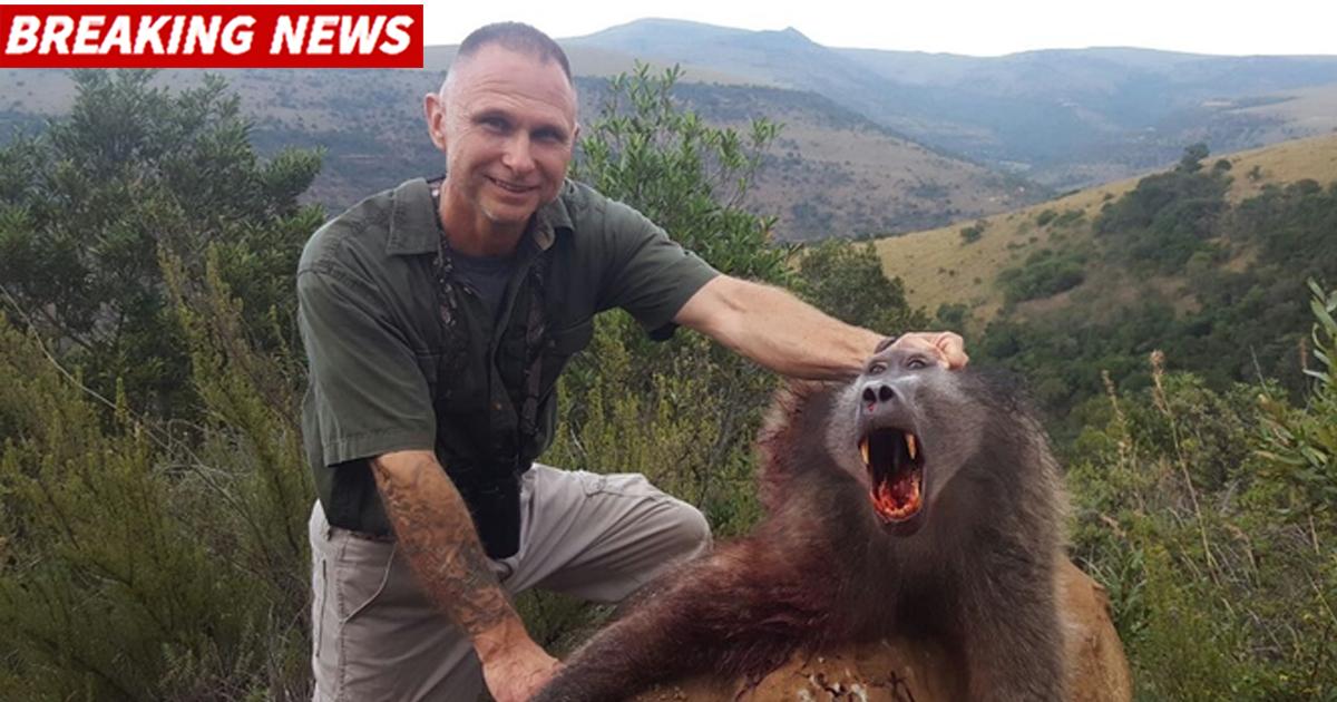 Cazador comido vivo por leones después de matar a tres familias de babuinos.
