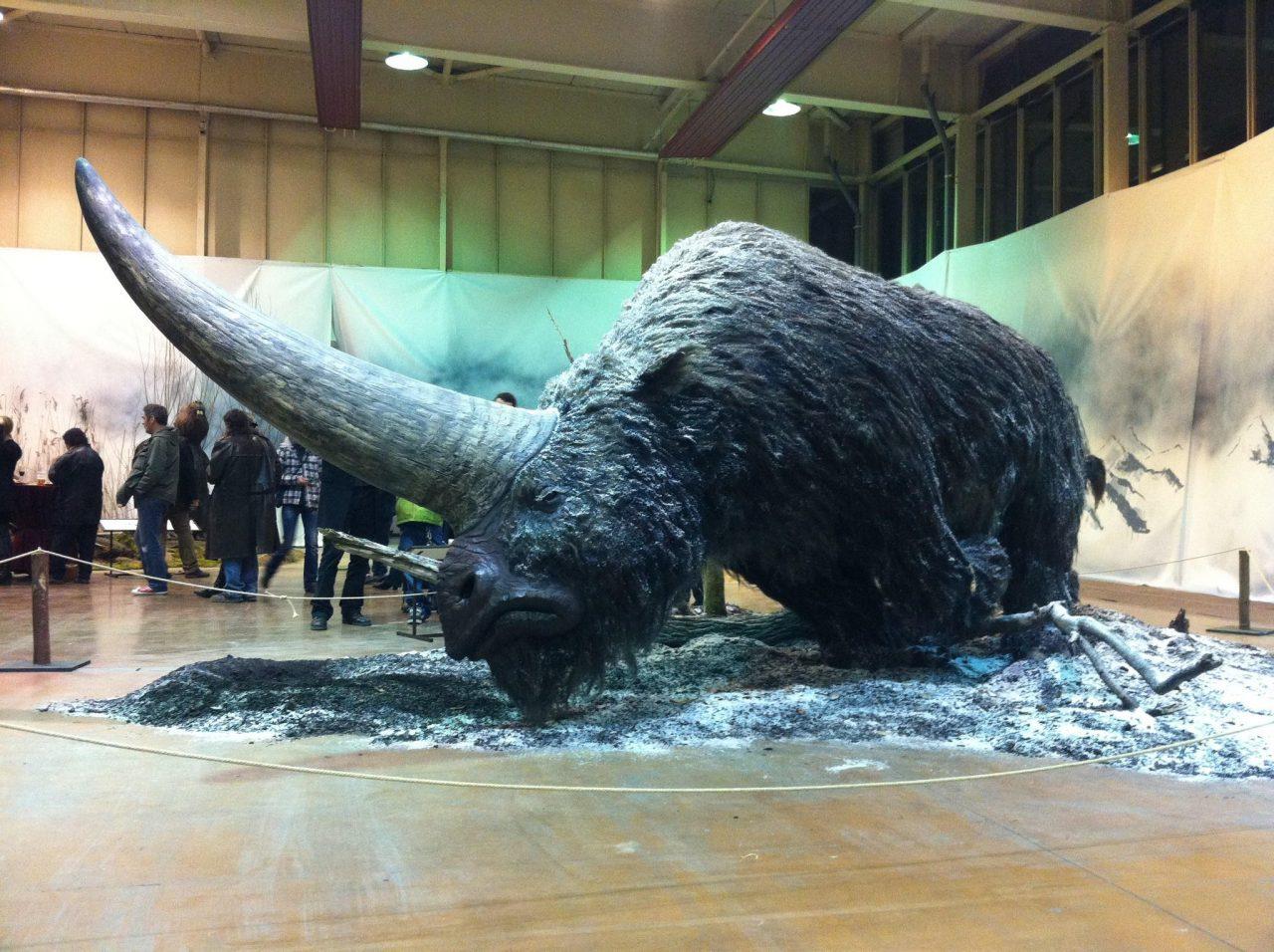 """Elasmoterio: El """"unicornio"""" gigante siberiano extinto hace 39000 años"""