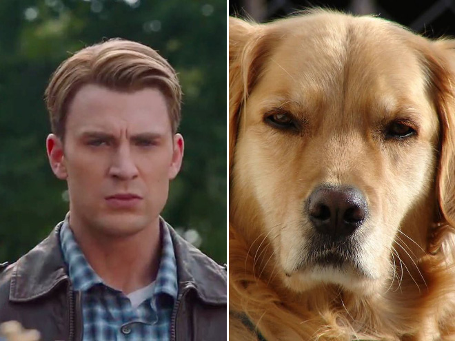 Una prueba de que Chris Evans es un golden retriever: