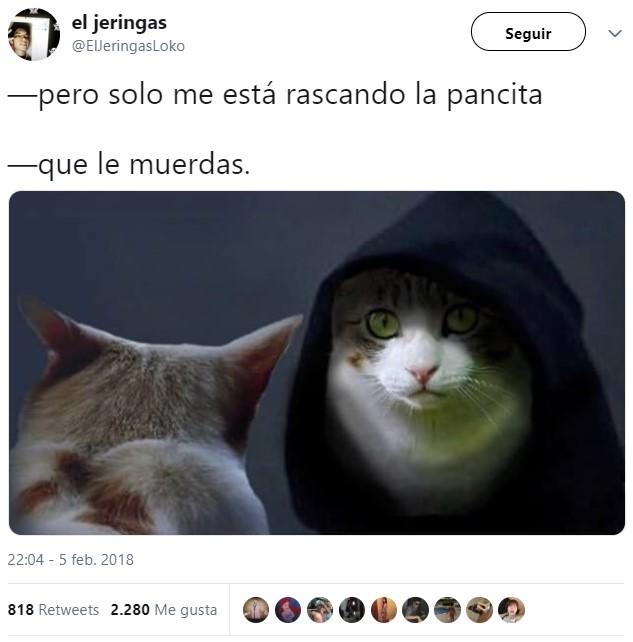 Cada vez que tocas a tu gato...