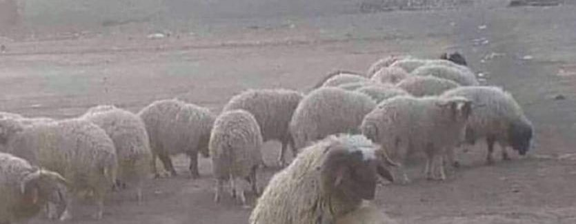 Ir a por lana y salir trasquilado