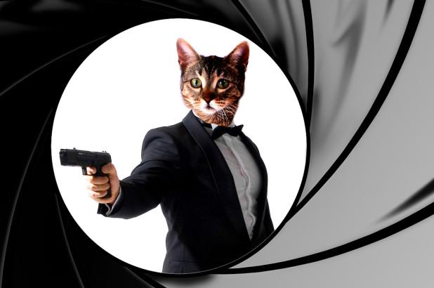 El embajador de Ecuador asegura que el gato de Julian Assange era un espía