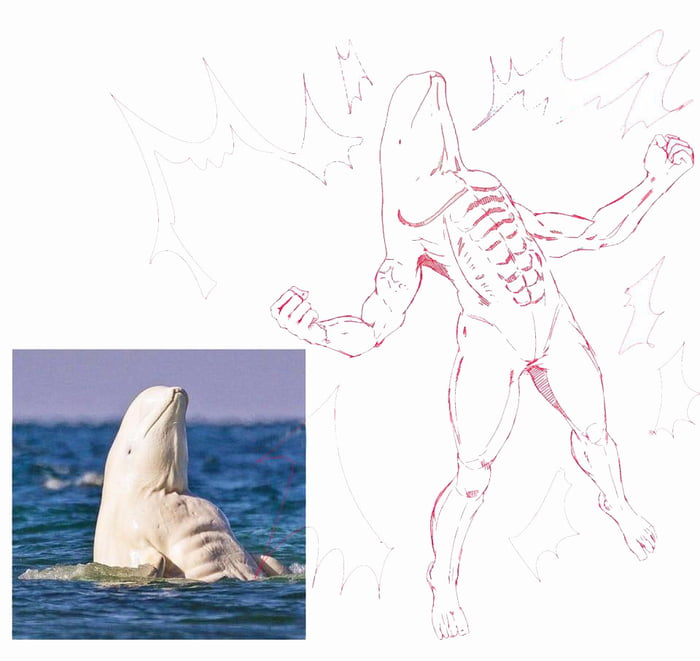 Un delfín albino rocoso