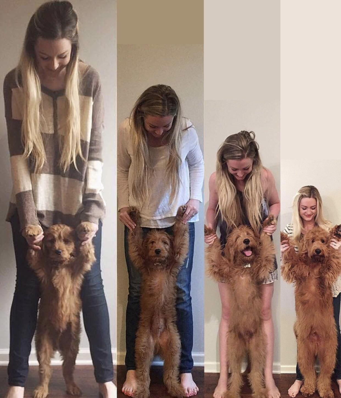 Mostrando el crecimiento del perro de forma inversamente relativa