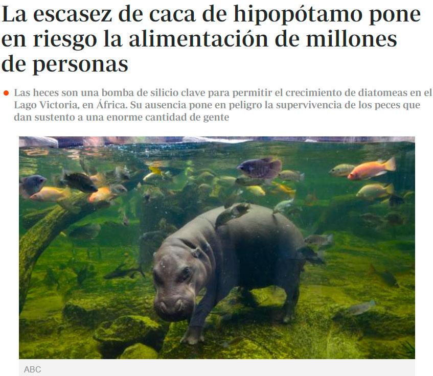 La vida de millones de personas depende de las heces de hipopótamo.