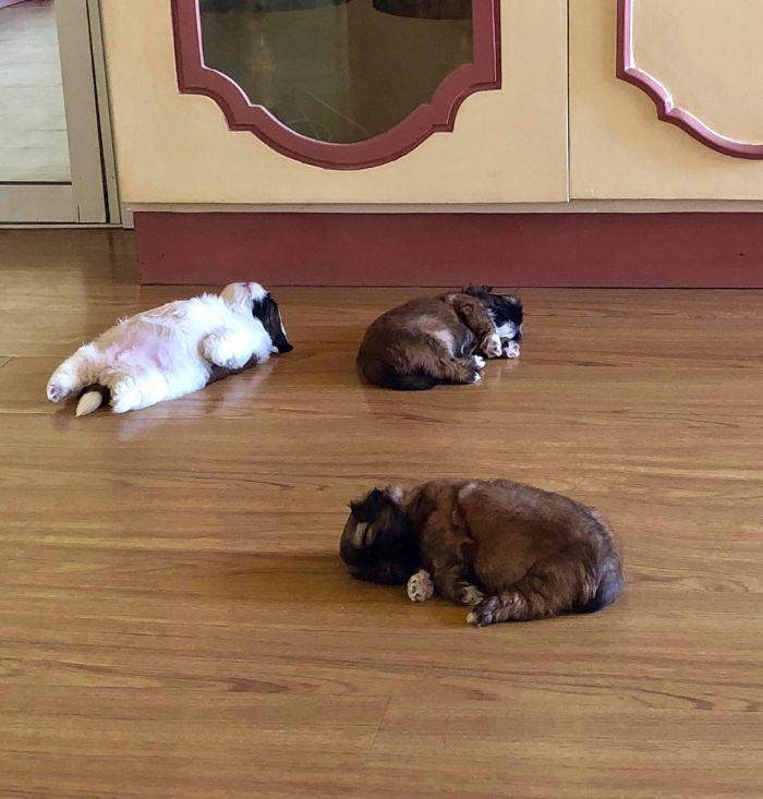 La divertida forma de dormir de este cachorro se ha vuelto viral en internet [29 fotos]