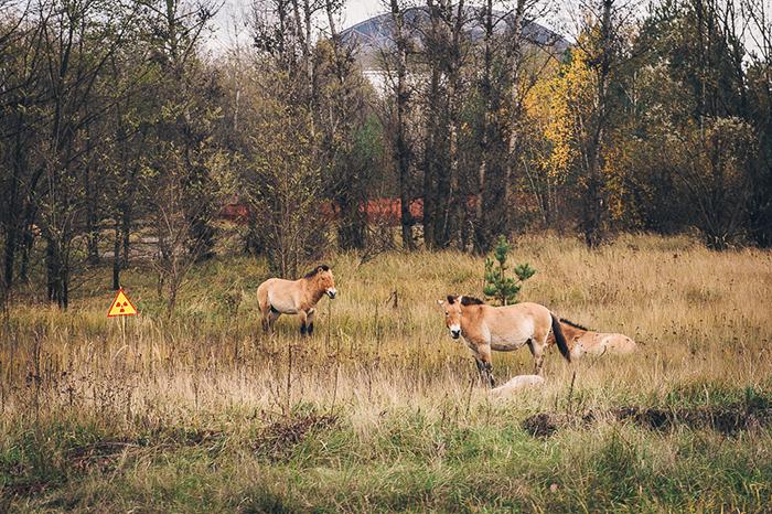 68 fotos de la naturaleza reclamando lo que es suyo en Chernobyl