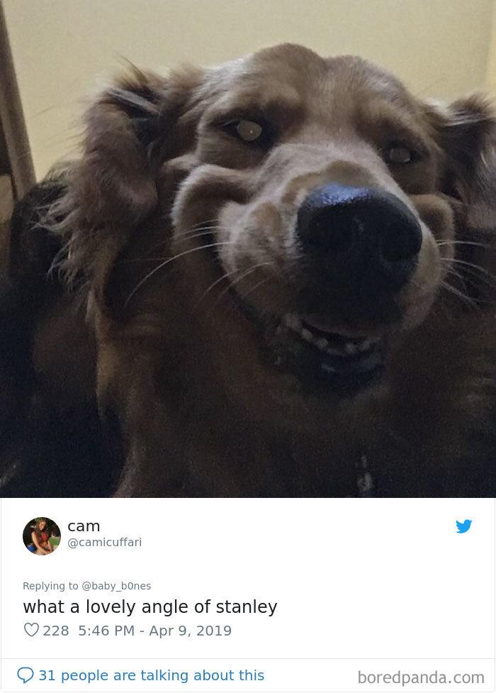 Galería de mascotas que salen peor que tú en las fotos