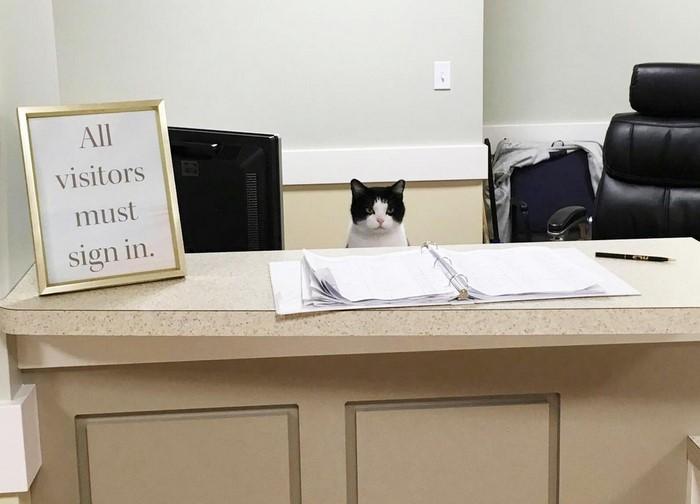 Gatos trabajando, el recopilatorio que estabas esperando