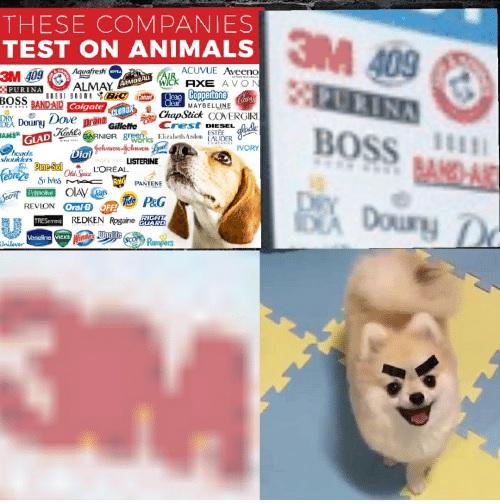 Filtradas fotos de más compañías que testan con animales