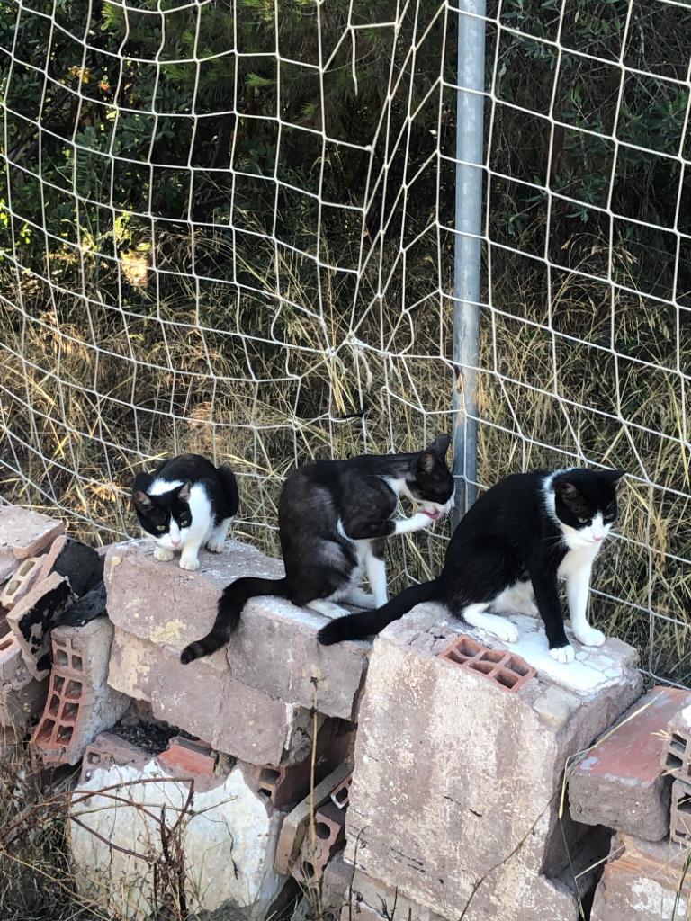 4 gatas que se han quedado sin dueños (because of reasons) buscan hogar