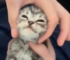 Cuando descubres el masaje que buguea a tu gato