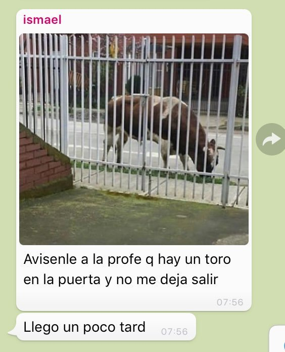 Sos inimputable, hermano