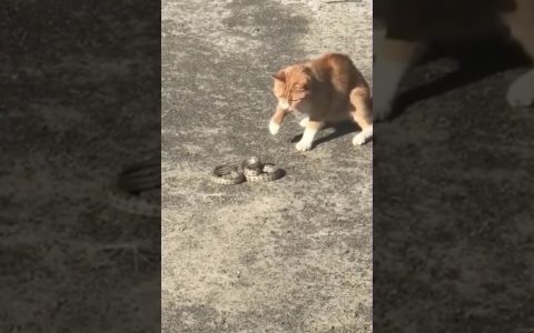 Gato vs serpiente: FIGHT!