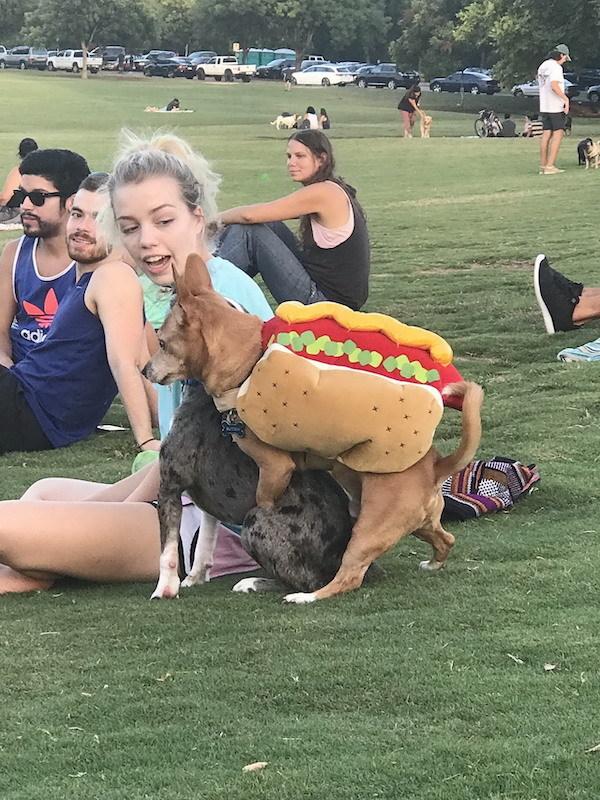 Perrito muy caliente