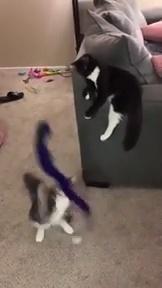 ¿Quién dijo que los gatos no saben usar herramientas?