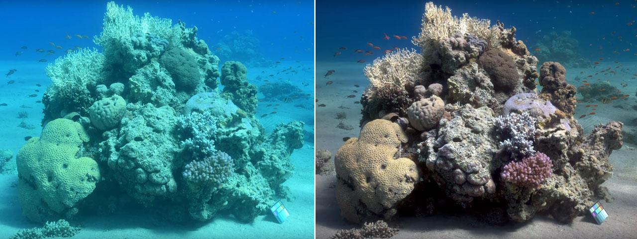 Un algoritmo que corrige las fotos submarinas y muestra los colores reales