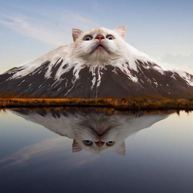 Este hombre no puede dejar de photoshopear animales en todo tipo de objetos