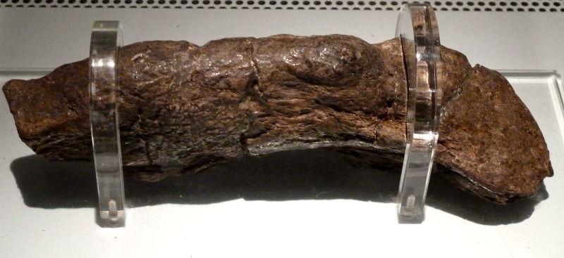 El ñordo humano fosilizado más grande del universo