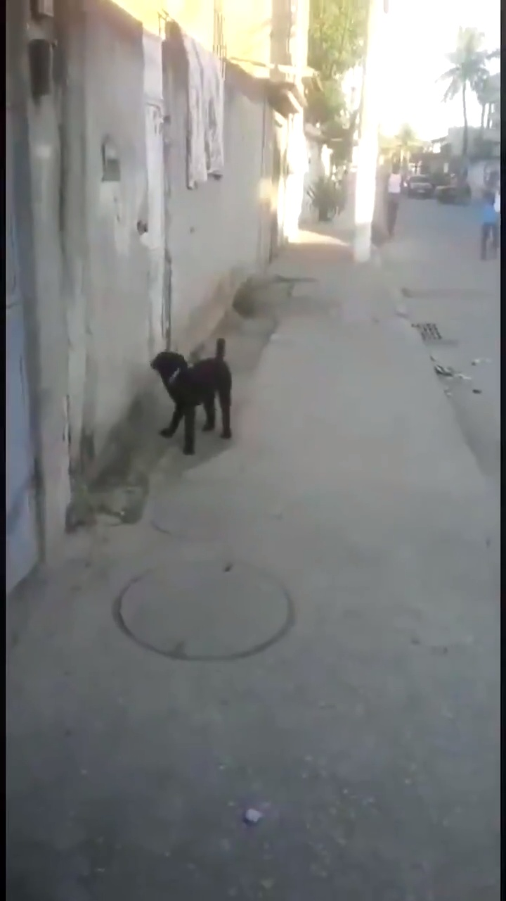 Me parece una falta de respeto a la raza humana que pudiendo llegarse con la boca, este perro haga eso...