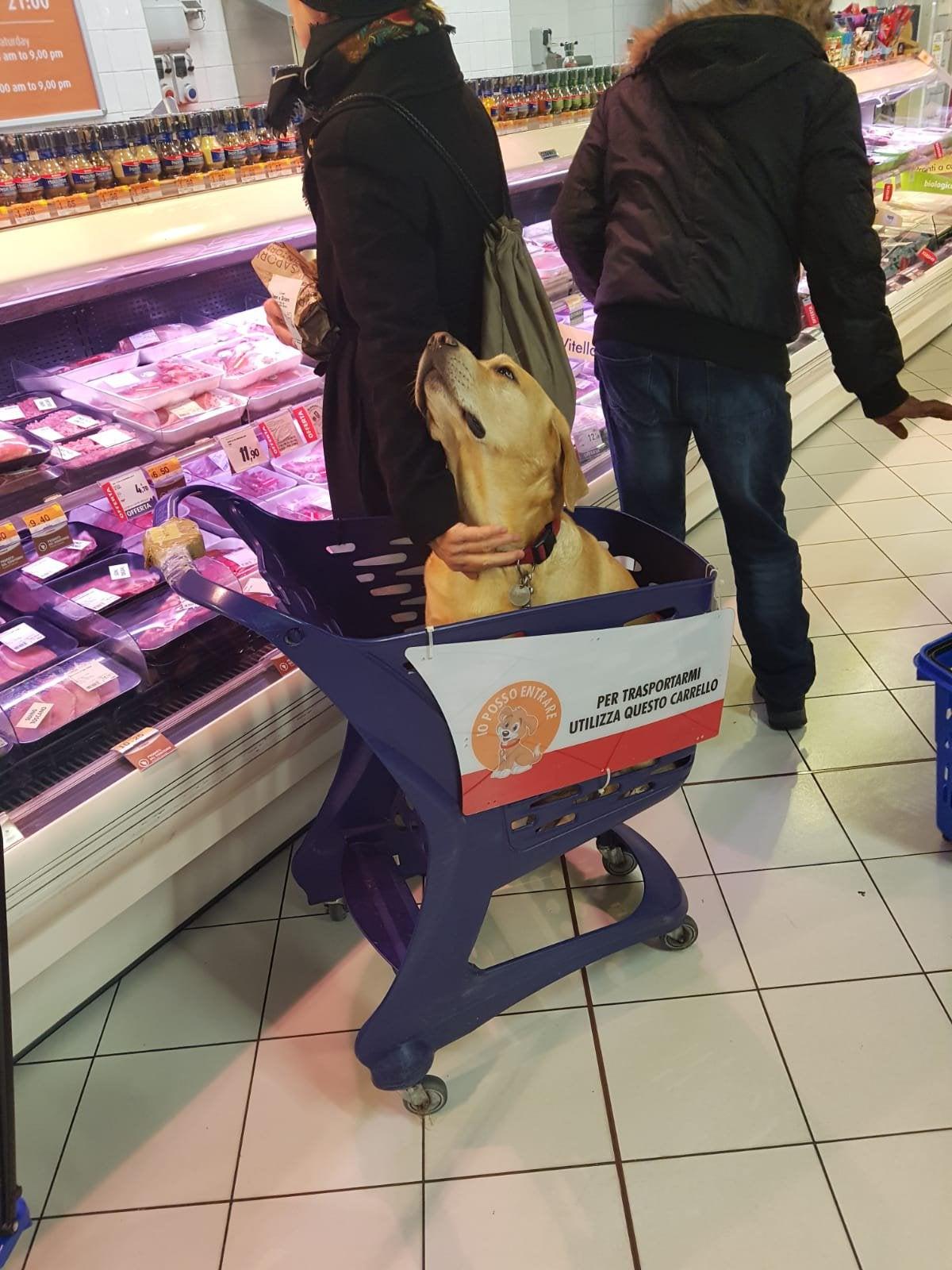 ¿Sabías que en algunos supermercados italianos hay carros para poder entrar con tu mascota?