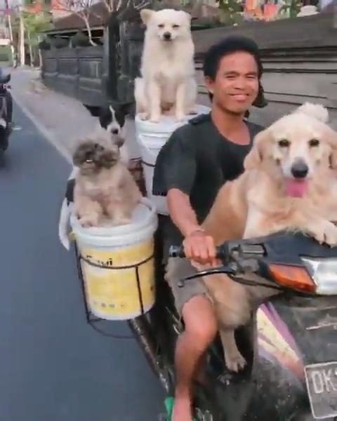 Un vietnamita yendo en moto con 5 cubos de pintura y 6 perros