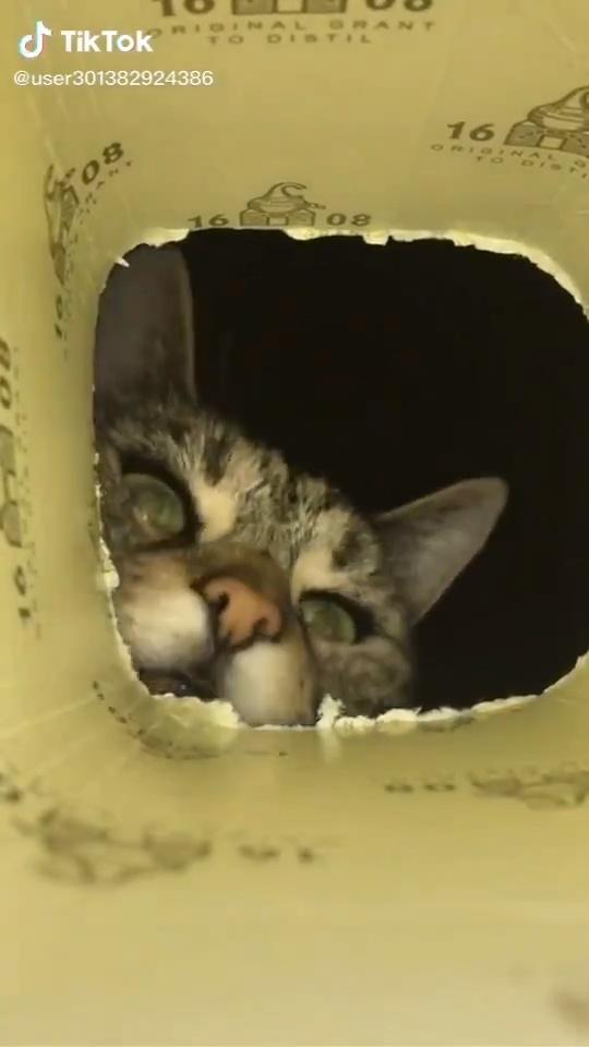En el vídeo importante del día estás dentro de un bote y eres una galleta que un gato no es capaz de atrapar