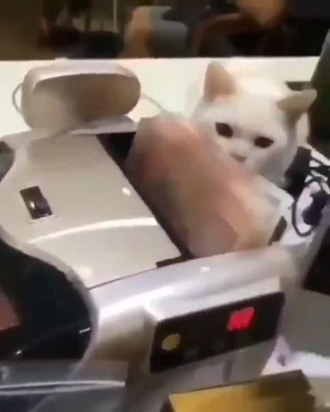 Impuesto gatuno