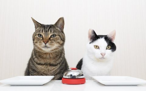 2 cats 1 bell