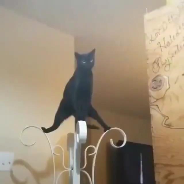 Meowing cabezas Fat Cat Comida para Gatos Delgado