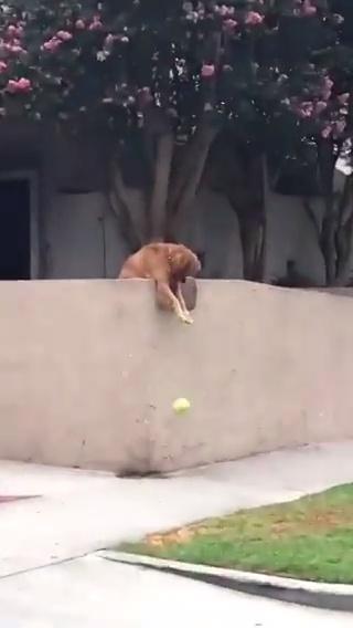 Todas las mañanas se cuelga de la pared y tira su juguete para obligar a cualquiera que pase a que juegue con él :3