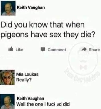 Una curiosidad sobre las palomas que seguramente no conocías