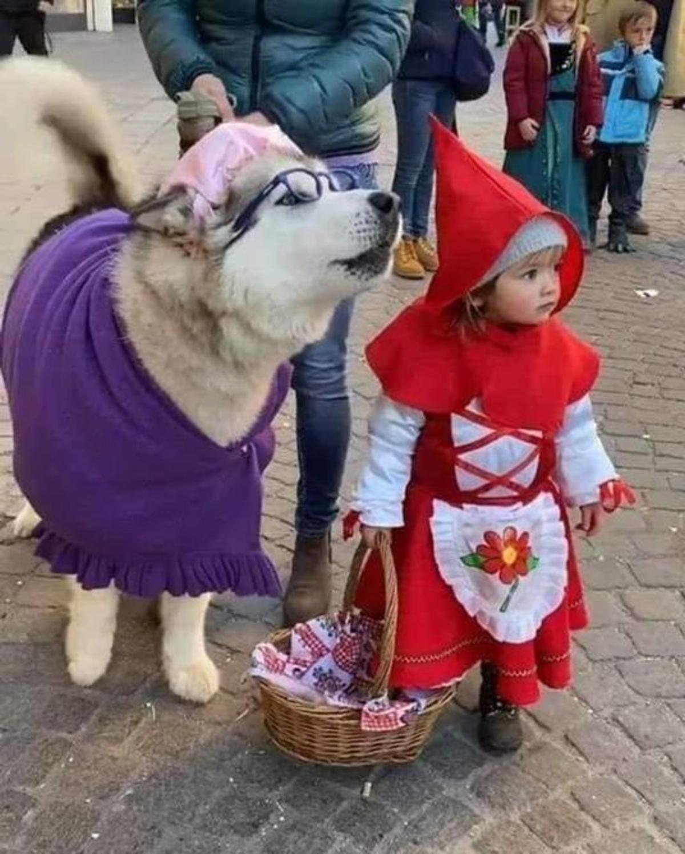 Gran disfraz de Caperucita y el Lobo