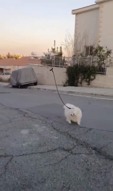 En Israel por lo visto no te dejan salir a la calle ni para sacar al perro, así que este crack ha encontrado un hack para que su perro pueda seguir paseando