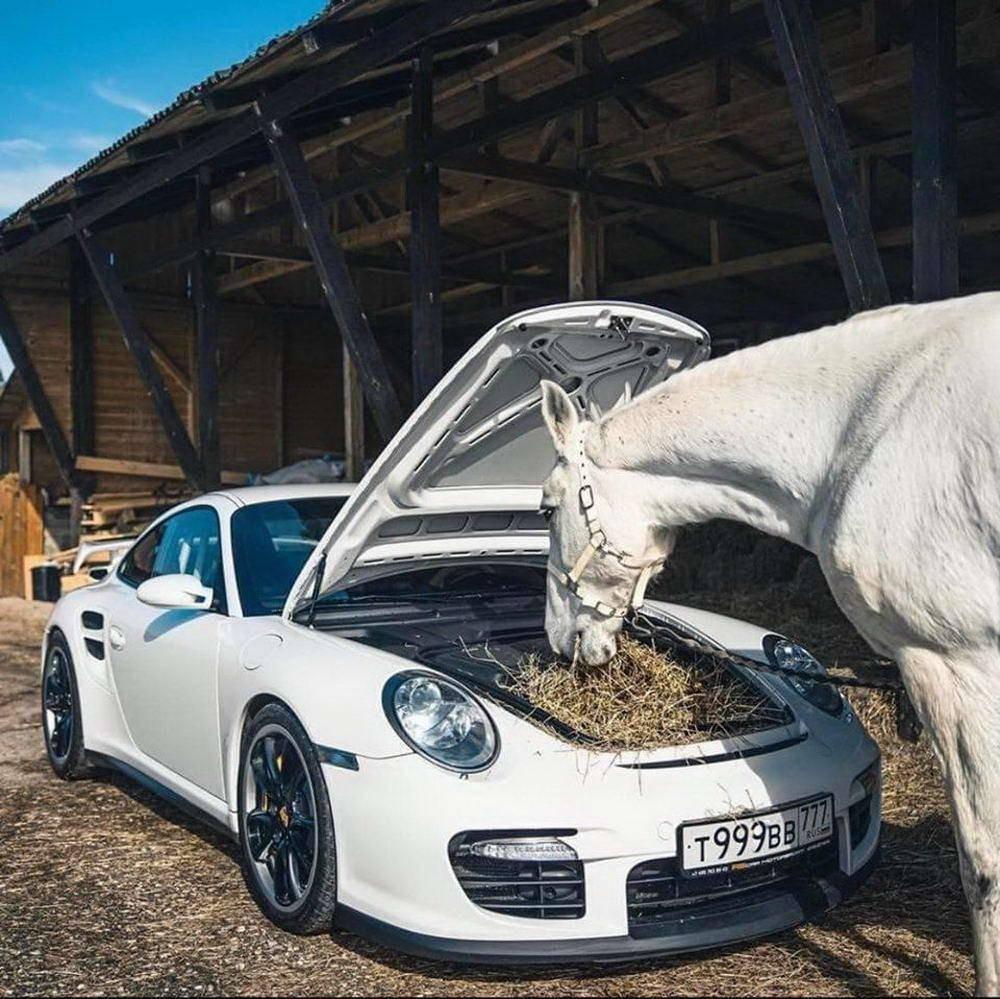 Mucho caballo, sí, pero hay que darles de comer...