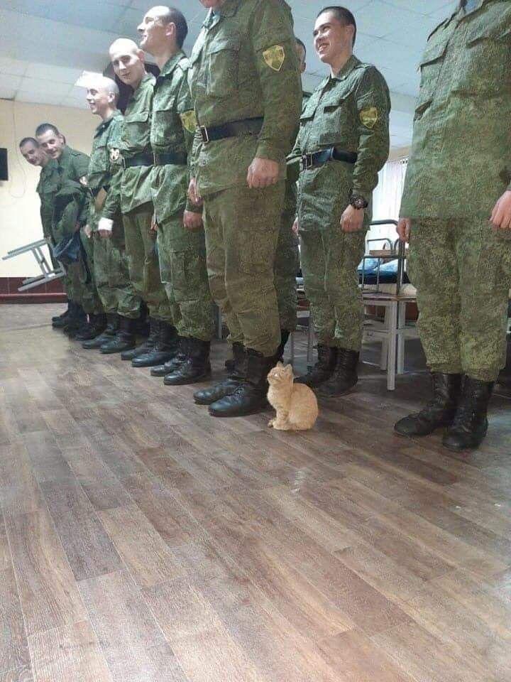Día 342 infiltrado en el ejército humano: creo que empiezan a sospechar algo...