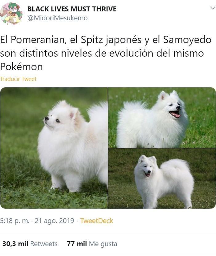 Pokémons de la vida real